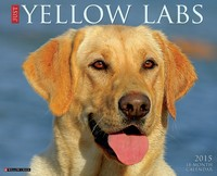 Just+Yellow+Labs+Wall+Calendar+2015